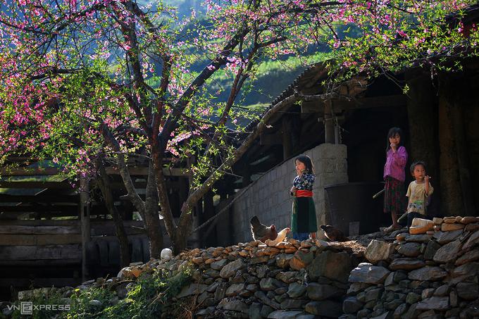 Đến Hà Giang ngắm sắc xuân trên cao nguyên đá - hinh 3